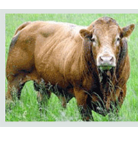 Livestock , Grass Production